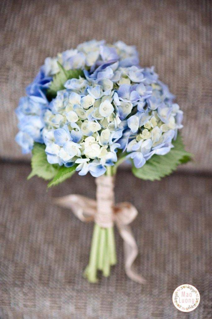 Cẩm tú cầu được tạo bởi nhiều bông hoa nhỏ kết thành chùm hoa lớn rực rỡ sắc màu